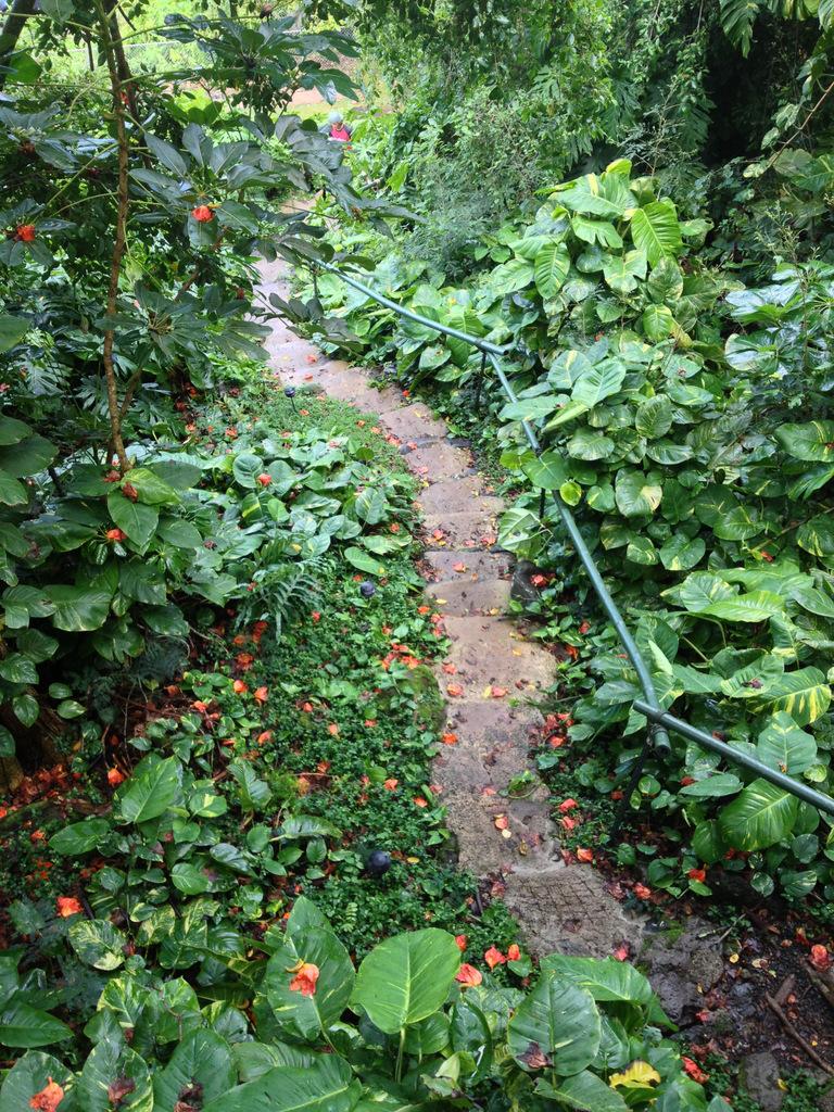 treehouse-bungalow-walkway