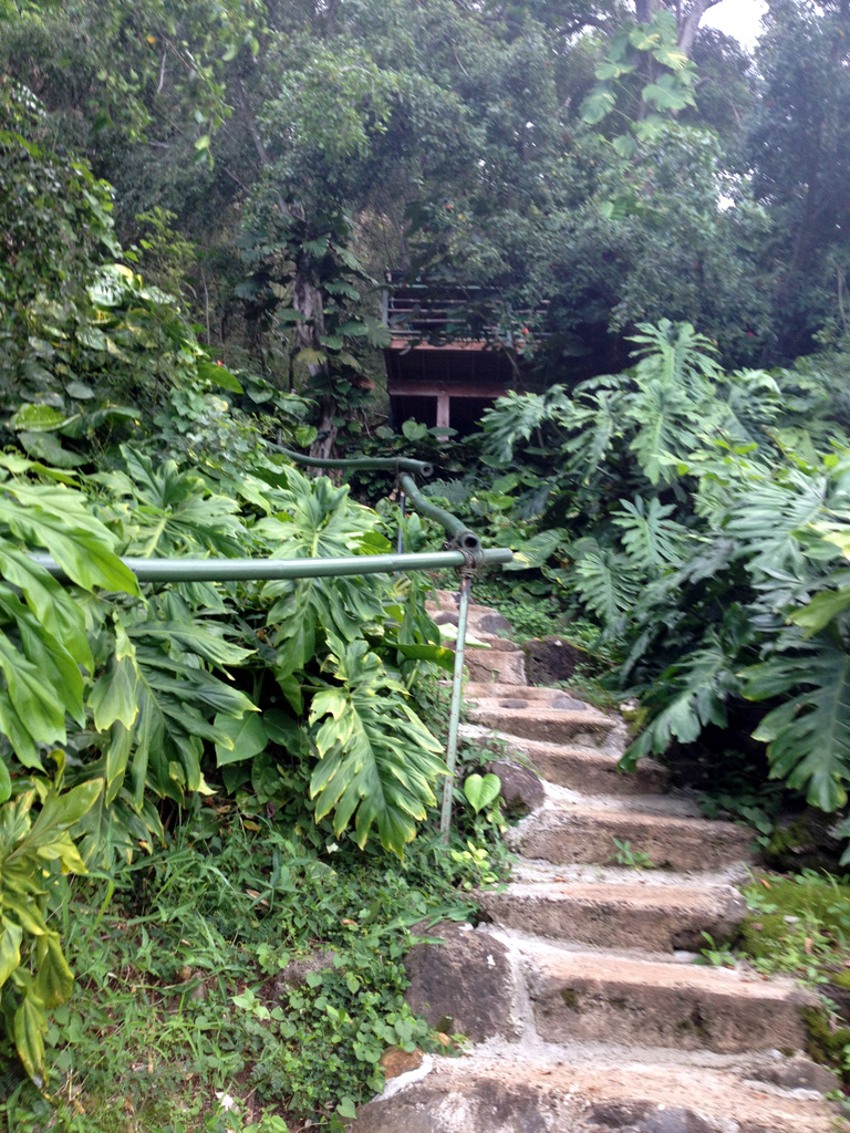 walkway-treehouse-bungalow-north-shore