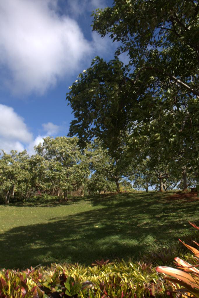 dole-plantation-tour-review-14.08.15