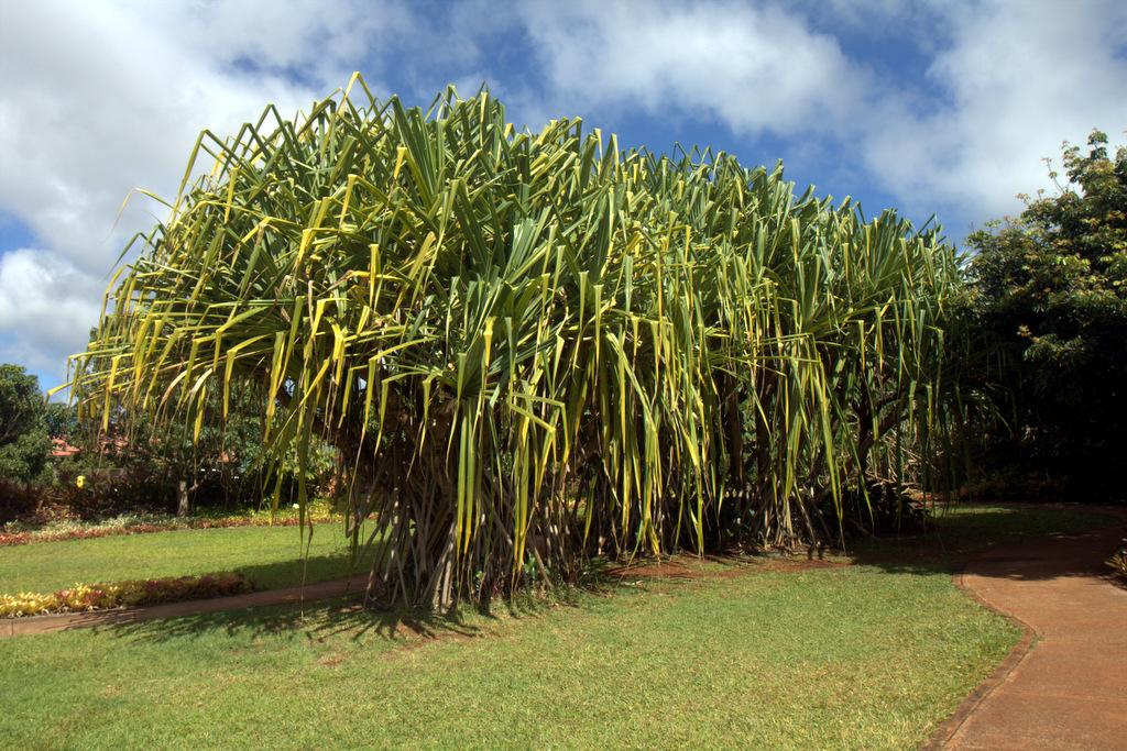 dole-plantation-tour-review-14.17.26