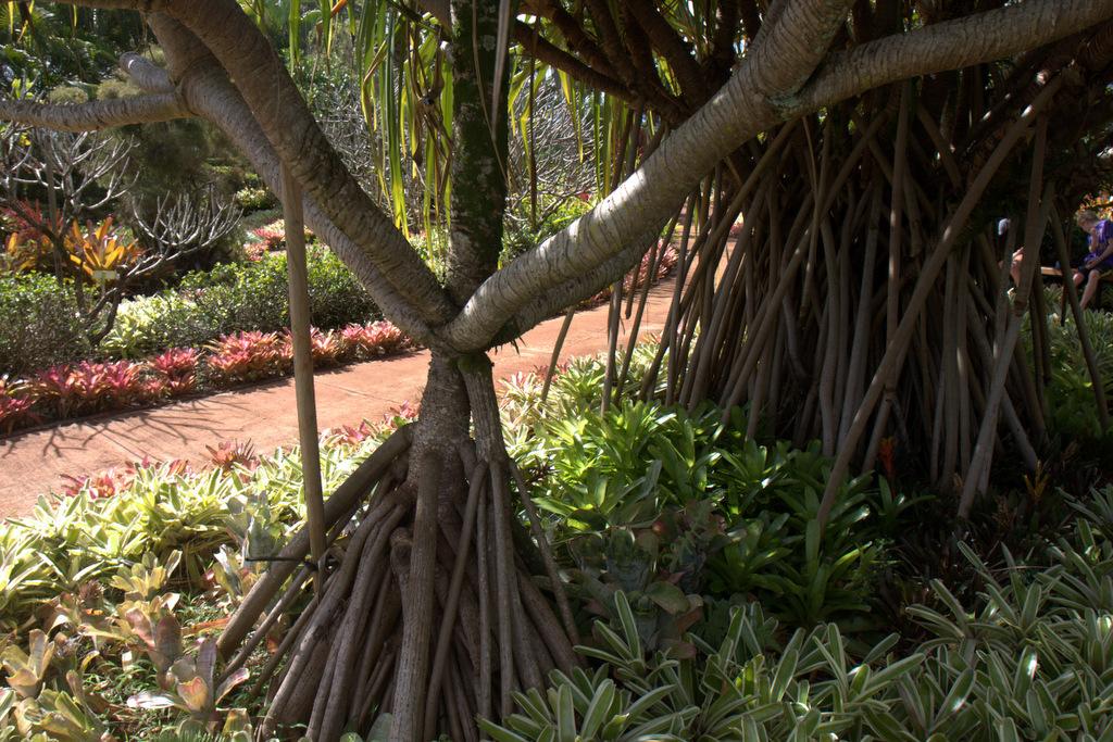 dole-plantation-tour-review-14.19.18