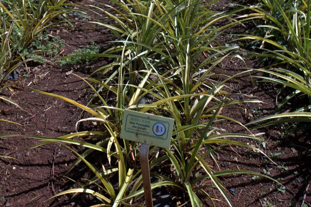 dole-plantation-tour-review-14.25.09